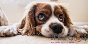 Accountants for veterinary groups